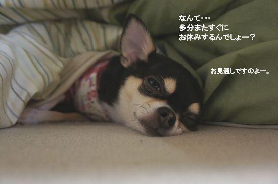 冬眠開け?2