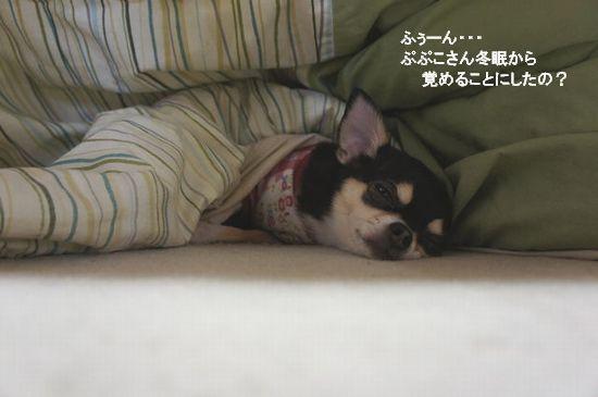 冬眠開け?1