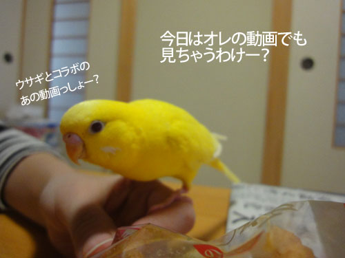 人気動画1
