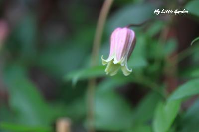 M口白ピンク系