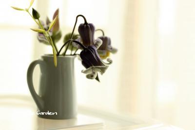 ドクターマリー&若紫