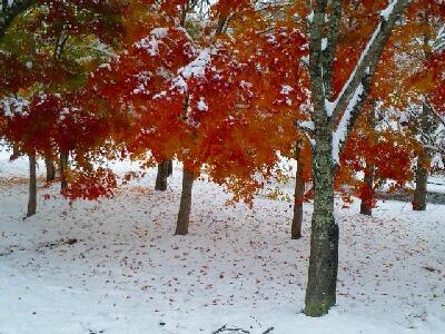 雪とモミジ