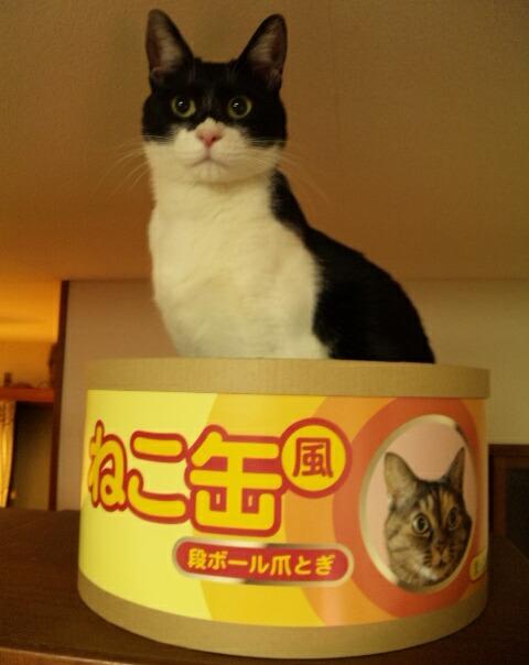 ねこ缶 4