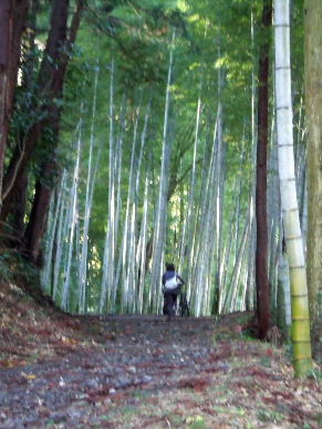 2009_1212東海道散歩0040