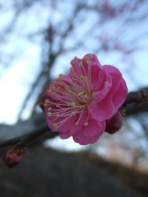 2010_0109松崎0091