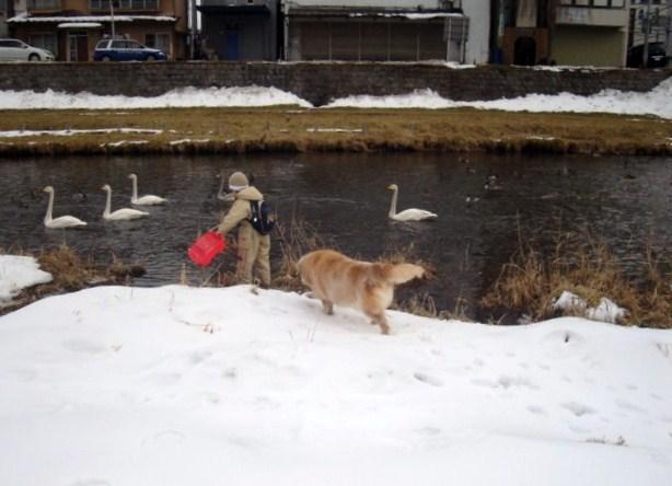 白鳥と犬とcoco