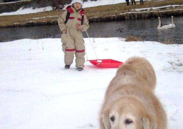犬は寒いそうだ。