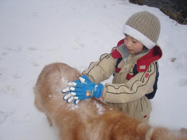 犬に雪を盛る。