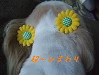 2010_081110061-1.jpg