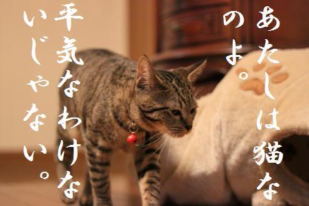あたしは猫・・・