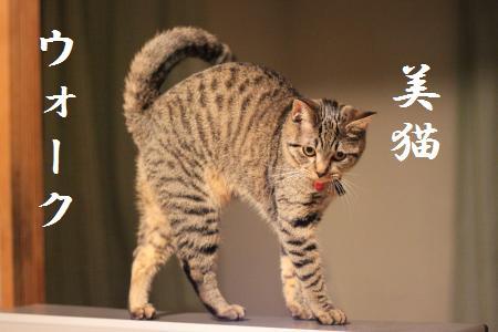 美猫ウォーク