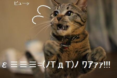 ≡≡≡=(ノTдT)ノ ワアァァ・・!!