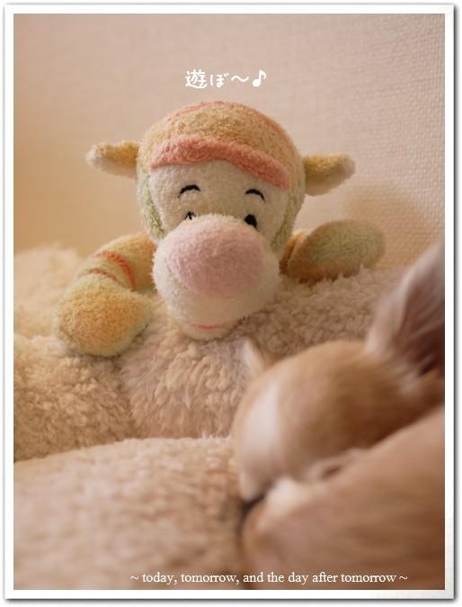 2009-12-30-01_20091230162406.jpg