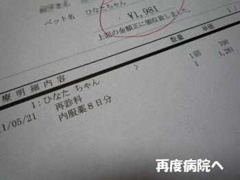 P1090611-110521.jpg