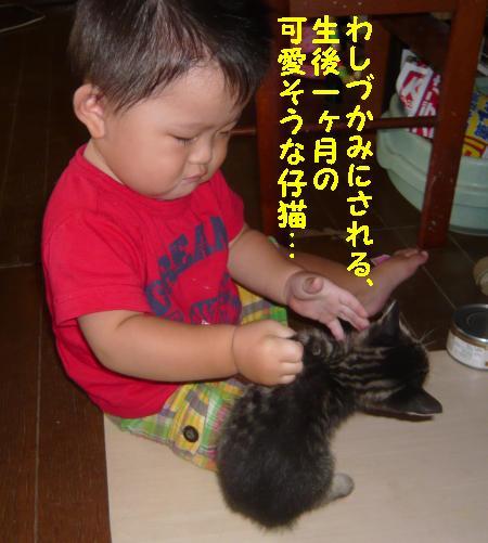 P1070111_convert_20110826201251.jpg