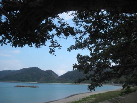 デイゴ並木から見える海岸
