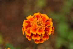 Flower closeup_17