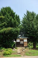 Big ginkgo trees_35