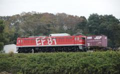 EF81_9
