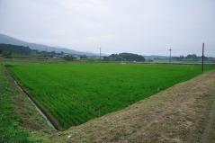 Wataribune_36