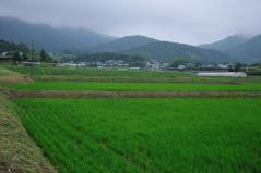 Wataribune_37