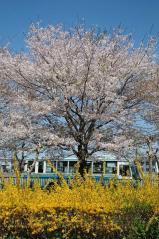 Kashitetsu bus_17