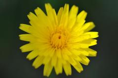 Flower closeup_16