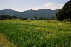 Wataribune 2011_47