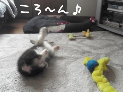 9oQDm_convert_20111017171625.jpg