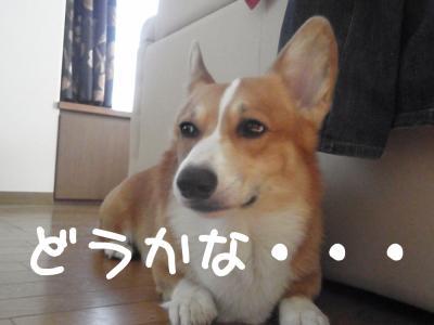 pbg2E_convert_20111011171821.jpg