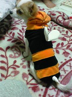 鈴 ハチ2
