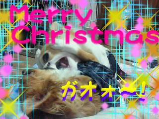 メリ~クリスマス