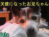 CIMG3418111.jpg