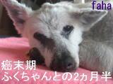 CIMG942811.jpg