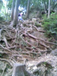 日和田山木の根