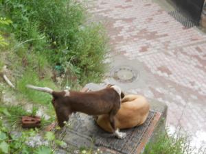 宿の裏の犬