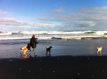 羊の国のラブラドール絵日記、冬のビーチにて写真3