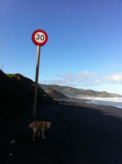 羊の国のラブラドール絵日記、冬のビーチにて写真6