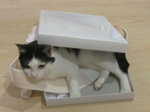 一緒に箱に入っとく?