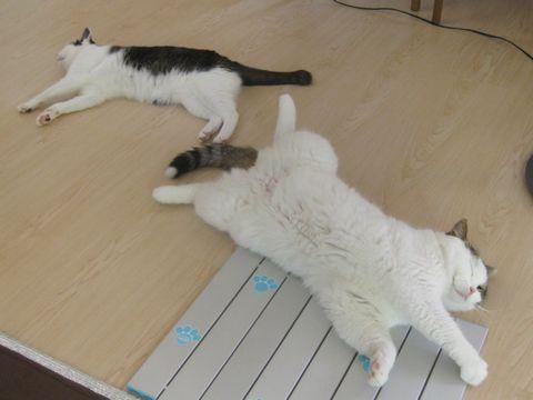 ダレて転がる猫's