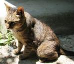 諏訪山 猫