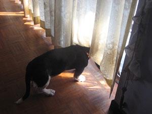 ソムタム、外を眺める