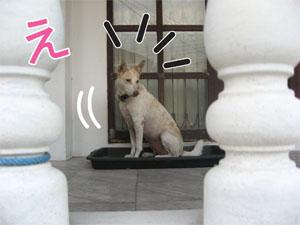 091111_5_Shiroko