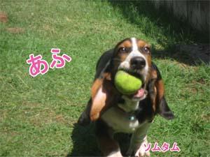 ソムタムのボール投げ 4