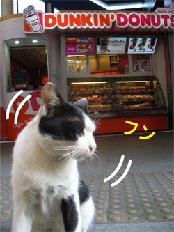 ネコとドーナツ その4