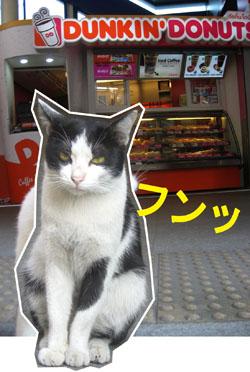 ネコとドーナツ その6
