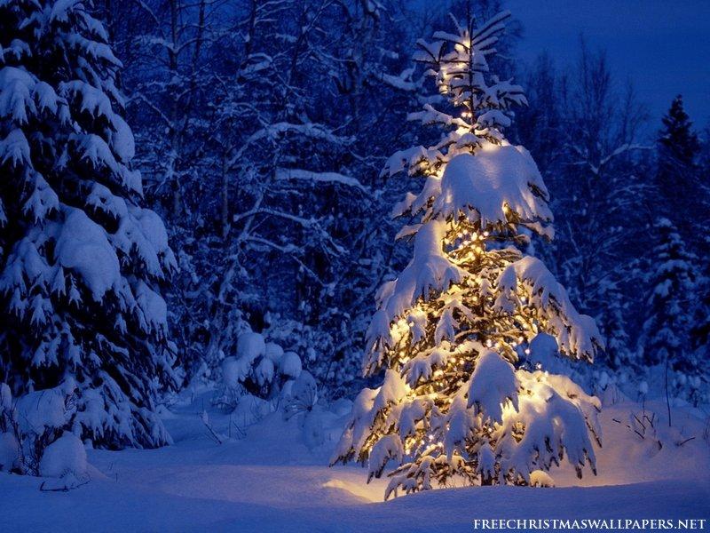 Lonely-Christmas-Tree-800-508849.jpg