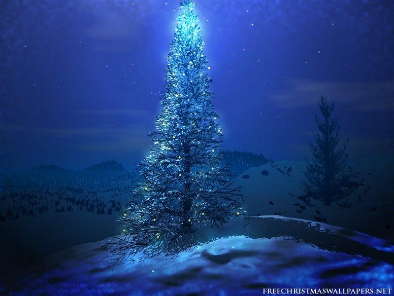 christmas-tree-under-stars-800-921561.jpg