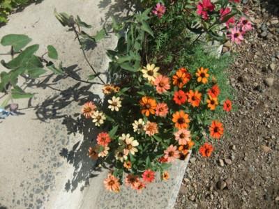種からお花