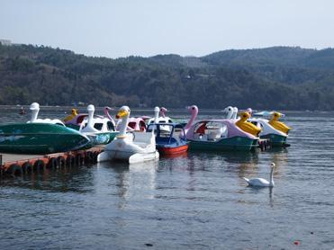 山中湖11